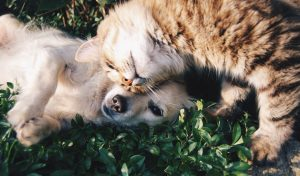 Dog and cat playing in the grass.