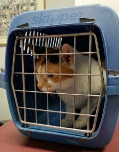 A cat in the carrier, to be used when moving with a cat.
