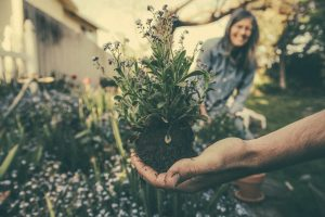 hand holding flowers for planting