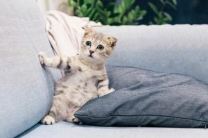 A terrified kitten on a couch with cushions