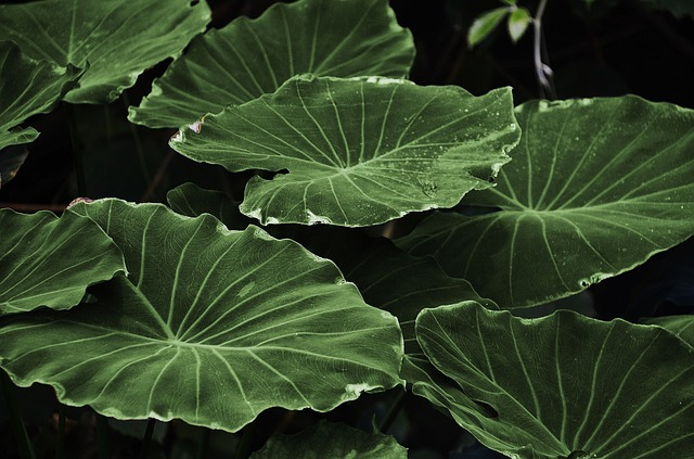 Plants for your apartment - green leaves