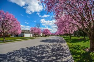A wide and smooth road, surrounded by beautiful pink flowered trees, and a set of nicely built white houses. This is the perfect neighborhood to choose when you decide moving for work.