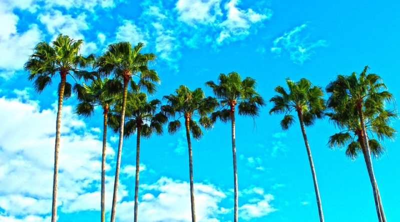 Palm trees you will enjoy after organizing your Florida move.