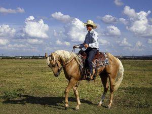 A cowboy on a horse.