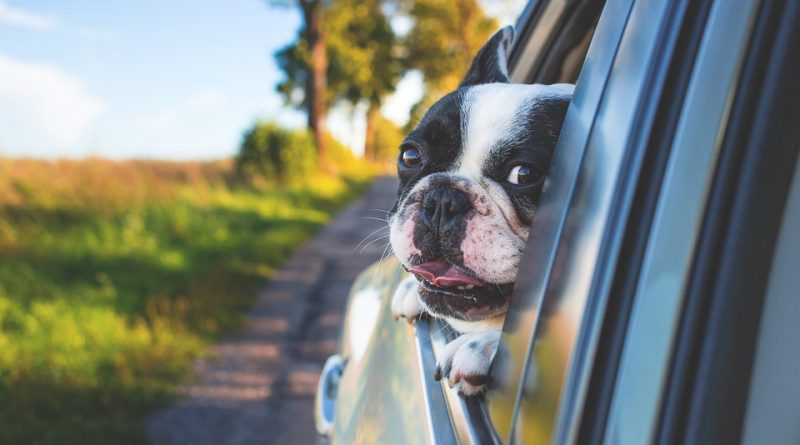 A dog looking through the window of a car while moving to one of the best neighborhoods of Fort Lee for dog owners.