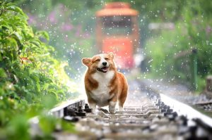 A little dog enjoying the walk on a railway.