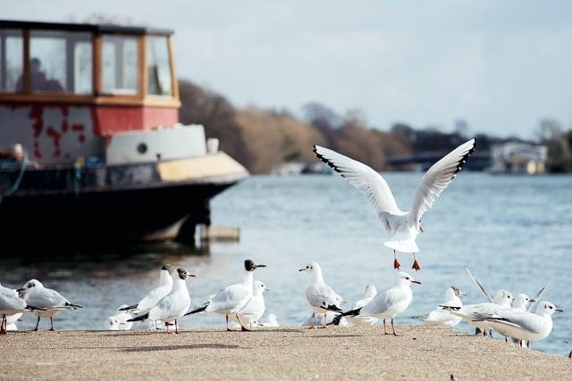 Seagulls on the sea shore.