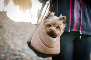 A little dog in a oet carrier.