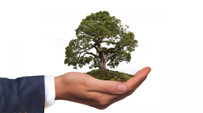 A man holding a tree in his hand and emphasizing the necessaity of finding eco-friendly storage solutions